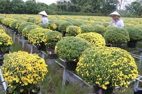 Les jardiniers du Centre souhaitent une bonne recolte pour le Tet hinh anh 1