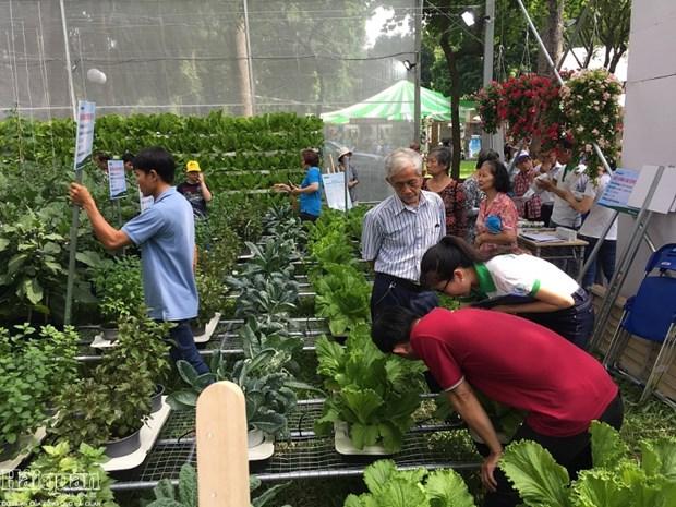 HCM-V: forte croissance de la valeur de production agricole en 2019 hinh anh 1