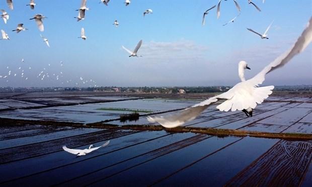 Thua Thien-Hue prend des mesures pour proteger les oiseaux sauvages hinh anh 1