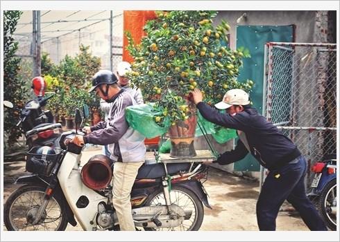 Ballade dans le village traditionnel des kumquats de Tu Lien hinh anh 4