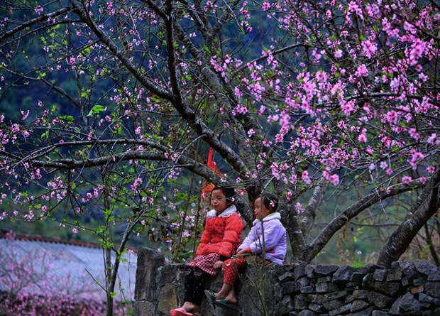 Quatre destinations a decouvrir pour le Tet au Vietnam hinh anh 1