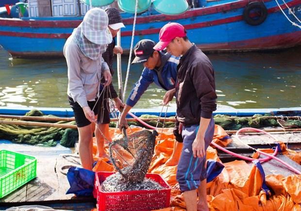 Une saison des anchois propice pour les pecheurs de Quang Tri hinh anh 1