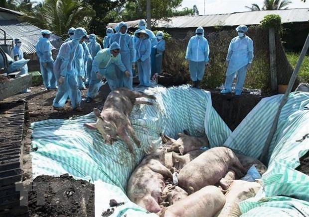 Le Vietnam et les Etats-Unis etudient conjointement un vaccin contre la peste porcine africaine hinh anh 1