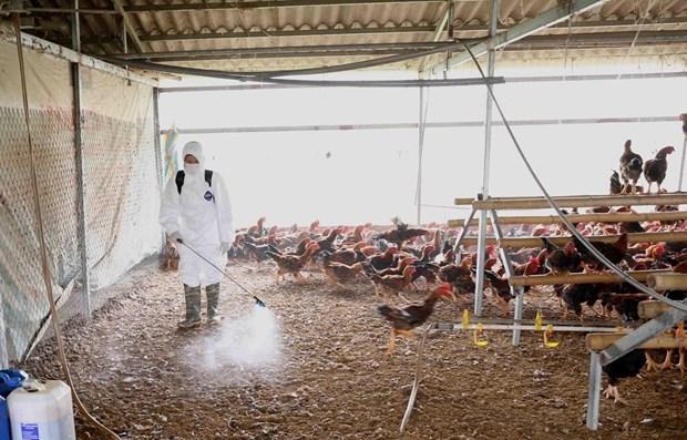 Le MADR demande la detection precoce des flambees de grippe aviaire hinh anh 1