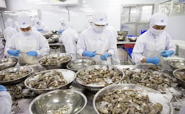Exportation de crevettes en UE: des perspectives positives hinh anh 1