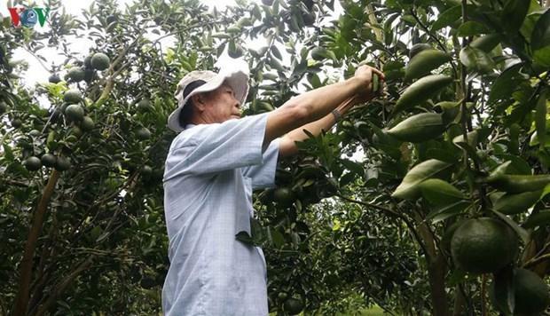 La fruiticulture a la peche dans le delta du Mekong hinh anh 1
