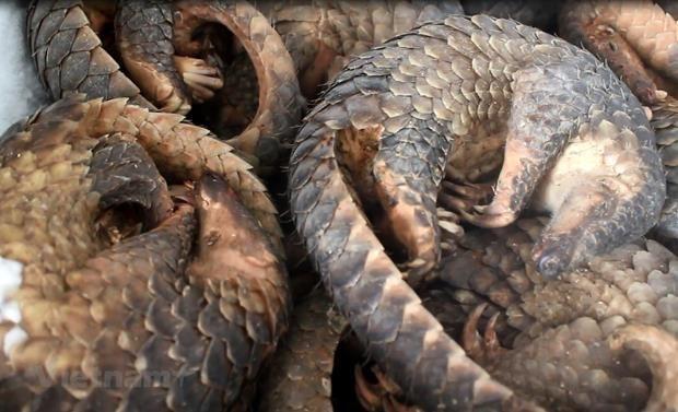 Le WWF appelle a mettre fin au commerce d'especes sauvages hinh anh 1