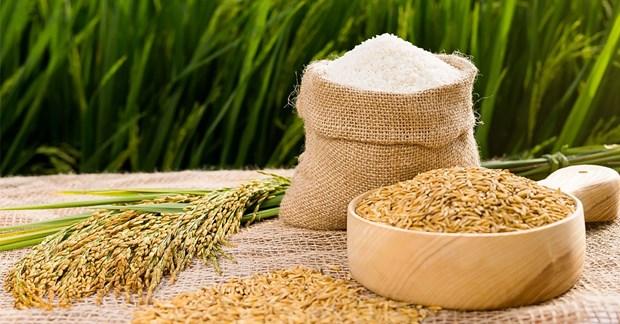 Les exportations de riz retrouvent des couleurs hinh anh 1
