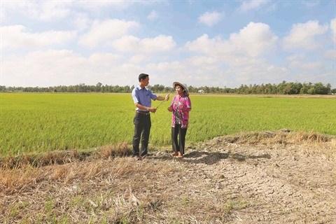 Secheresse et salinisation ravagent le delta du Mekong hinh anh 2