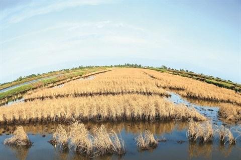 Secheresse et salinisation ravagent le delta du Mekong hinh anh 1