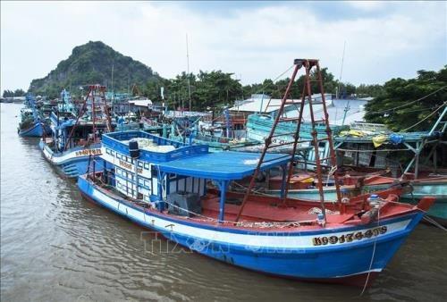 Kien Giang s'efforce d'empecher les activites de peche illicite hinh anh 1