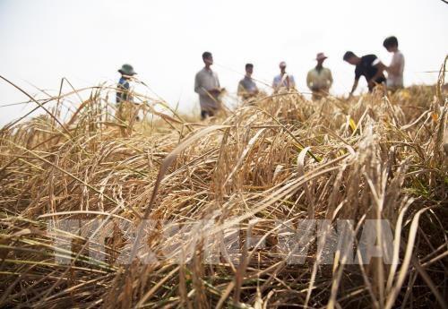 Le FVC accorde 30 M d'USD au Vietnam pour renforcer la resilience climatique hinh anh 1
