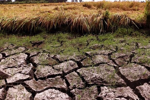 Le PNUD aide le delta du Mekong dans ses efforts de reponse a la secheresse hinh anh 1