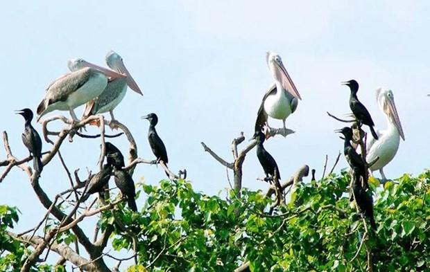 Le « jardin d'oiseaux » de Bac Lieu parmi les 10 reserves ornithologiques les plus celebres au monde hinh anh 1