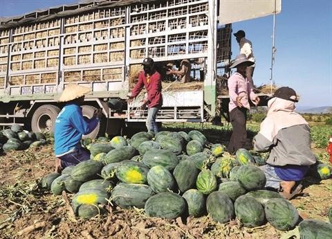 Promouvoir l'exportation des produits agricoles hinh anh 1