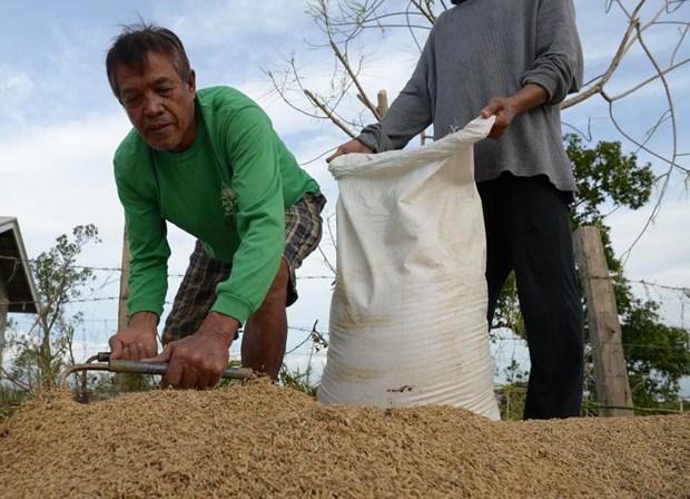 Les Philippines prevoient d'augmenter leurs achats de riz hinh anh 1