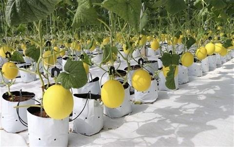 Un jeune couple fait fortune grace a l'agriculture high-tech hinh anh 2