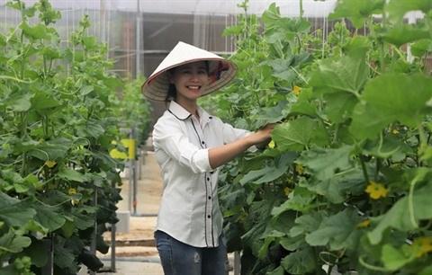 Un jeune couple fait fortune grace a l'agriculture high-tech hinh anh 1