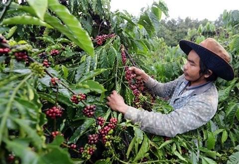 Promouvoir le cafe vietnamien a l'etranger hinh anh 3