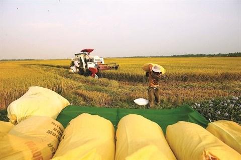 Assurer la securite alimentaire est une priorite vietnamienne hinh anh 1