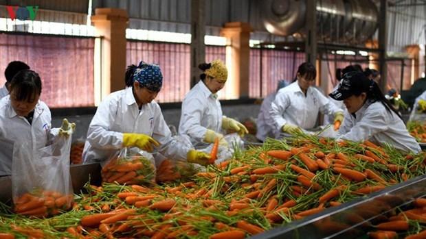 Vietnam: l'agriculture enregistre un excedent commercial malgre le coronavirus hinh anh 1
