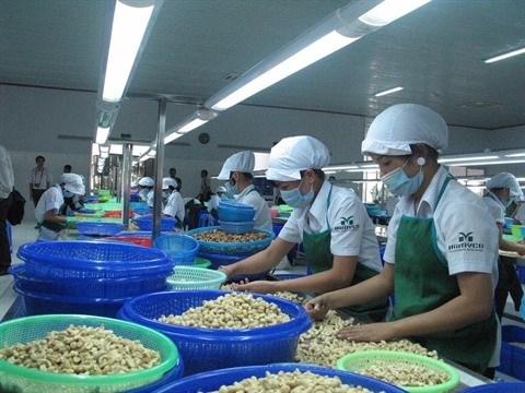 Hausse des exportations de noix de cajou hinh anh 1
