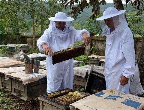 Des paysans innovants a Dien Bien hinh anh 1
