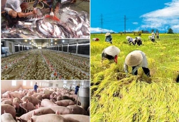 Les localites reprennent leurs activites economiques hinh anh 1