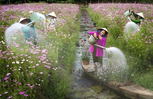 Un photographe vietnamien prime au concours #Spring2020 hinh anh 4