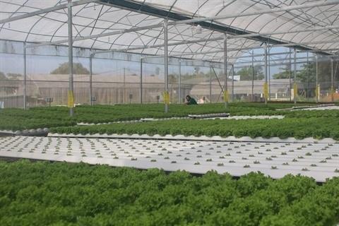Da Nang promeut le developpement des cooperatives agricoles hinh anh 1