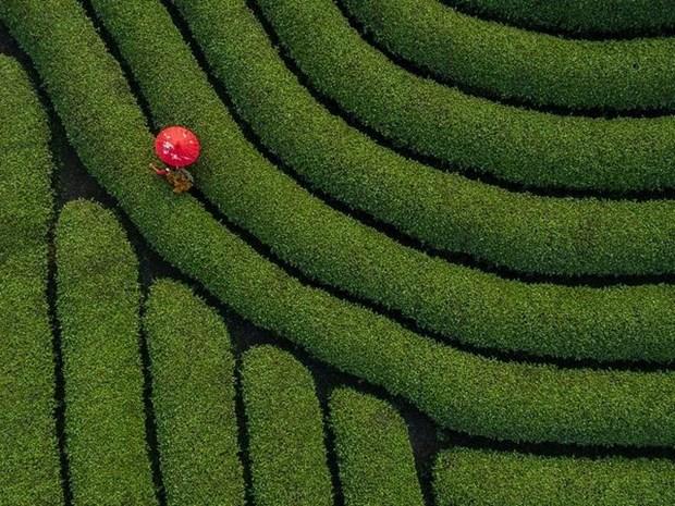 Un photographe vietnamien prime au concours #Spring2020 hinh anh 3