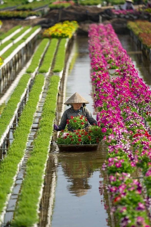Un photographe vietnamien prime au concours #Spring2020 hinh anh 6