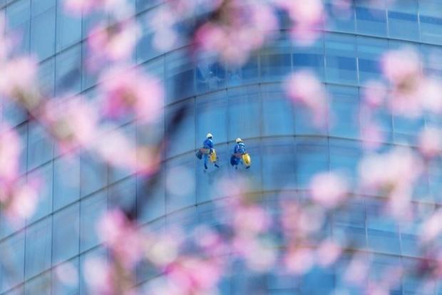 Un photographe vietnamien prime au concours #Spring2020 hinh anh 9