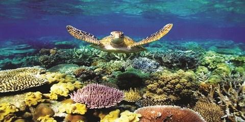 La protection de la vie marine au cœur d'une strategie nationale hinh anh 1