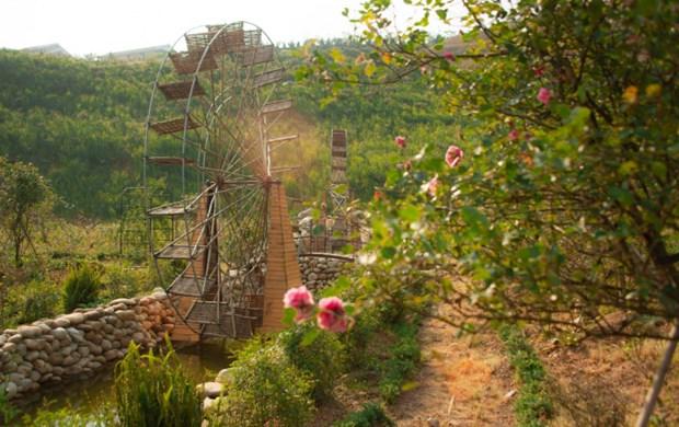 La vallee de roses a Sapa reconnue comme la plus grande du Vietnam hinh anh 3