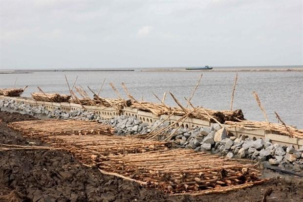 La province de Ca Mau travaille pour prevenir l'erosion et l'affaissement hinh anh 1