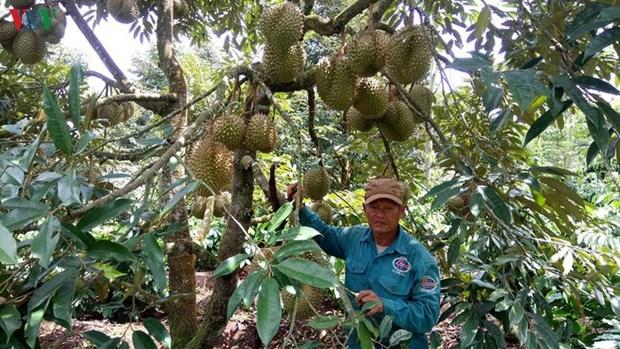 La polyculture, une reponse aux aleas du changement climatique hinh anh 1