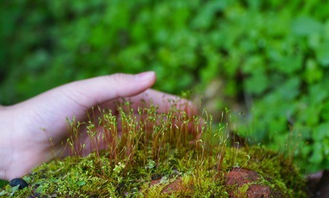 Biodiversite : agir pour les generations futures hinh anh 1
