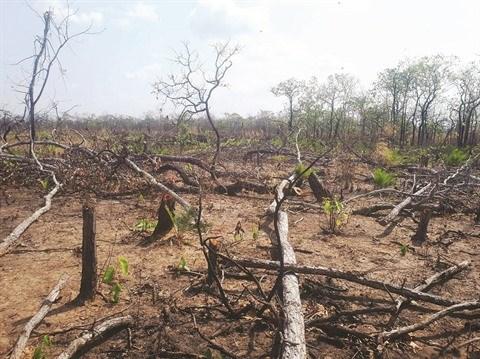 Le Vietnam face au defi du declin de la biodiversite hinh anh 2