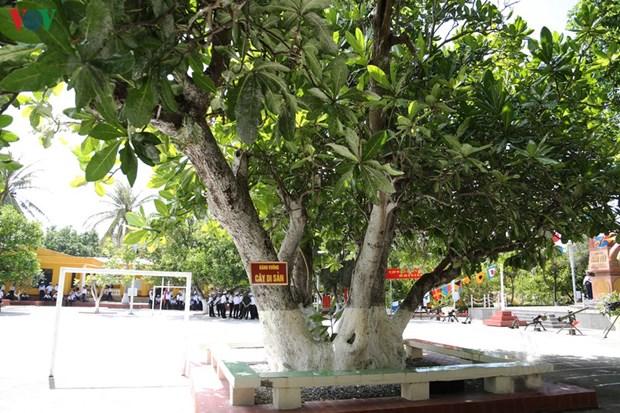 Spratly : quatre arbres reconnus
