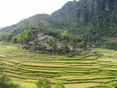 Errance dans la Reserve naturelle de Pu Luong a la saison du riz mur hinh anh 1