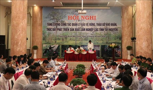 Le ministre demande des efforts pour la protection et le developpement des forets hinh anh 1