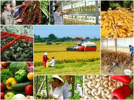 Libre-echange Vietnam-UE : le secteur agricole en est-il vraiment le grand gagnant ? hinh anh 1