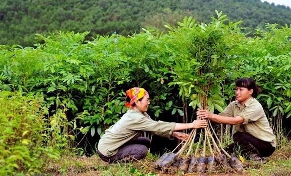 106.300 hectares de foret concentree plantes au premier semestre 2020 hinh anh 1