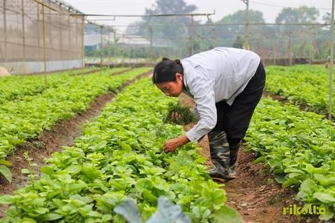 Sociologie rurale, filon de la cooperation Vietnam-Belgique hinh anh 2