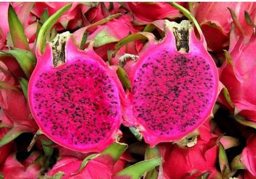 Le fruit du dragon a chair rouge bientot exporte vers le Japon hinh anh 1