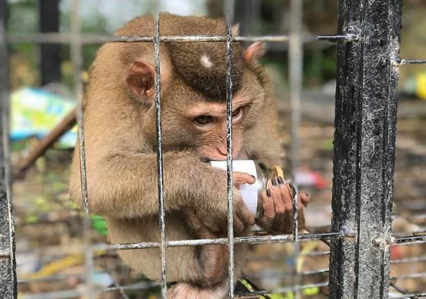 Le PM ordonne la suspension de l'importation d'animaux sauvages hinh anh 1