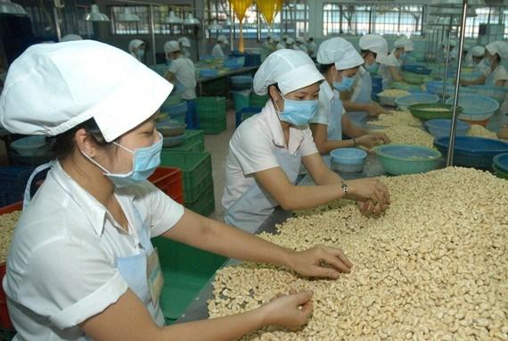 L'EVFTA promet de doper les exportations de noix de cajou hinh anh 1