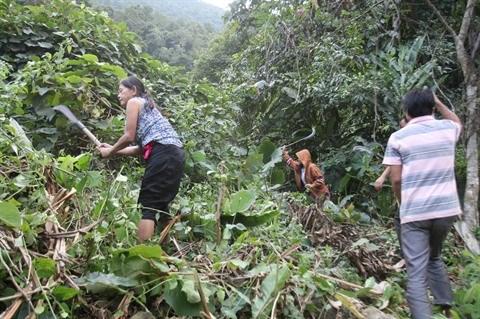 Le COVID-19 augmente la pauvrete transitoire au Vietnam hinh anh 1
