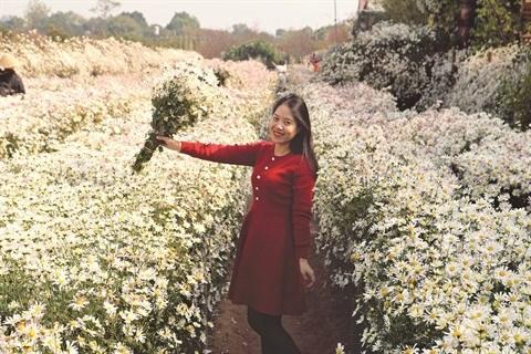 Les champs de fleurs, nouvelle manne touristique hinh anh 2
